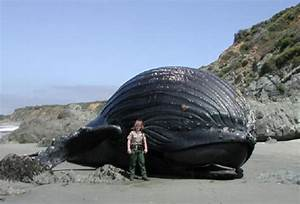 The Largest Animal Ever «TwistedSifter