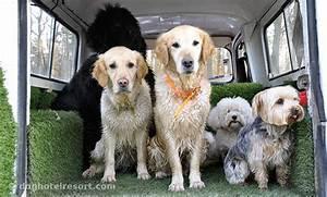 Hotel Pour Chien : garderie pour chiens et chats orl ans dog hotel resort ~ Nature-et-papiers.com Idées de Décoration