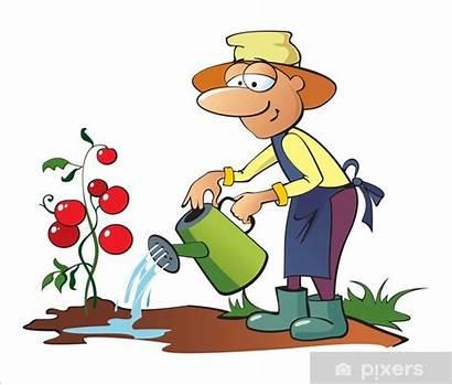 Jardinier Clipart Gardener Watering Arroser Tomates Tomatoes