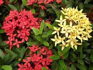 ecuadorfulbrightguaranda | US Fulbright Botanist in ...