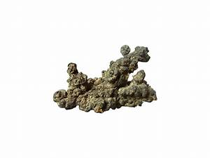 polyporus umbellatus extract/vigorous-tech