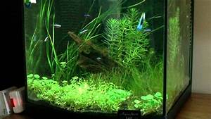 Liter Berechnen Aquarium : 40 litre aquarium youtube ~ Themetempest.com Abrechnung