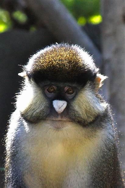 Monkey Face Pics4learning