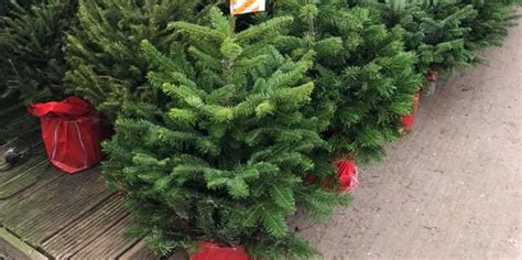 real potted christmas trees for sale asda sapcote garden centre leicester try our new cafe