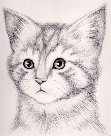 draw  realistic kitten draw realistic kitten
