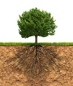 Green Tree with Roots