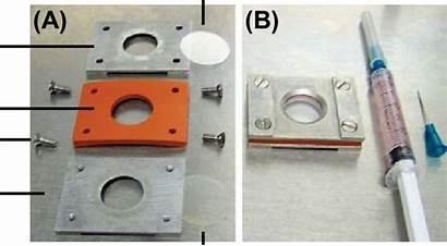 Chamber Imaging Cell Rose