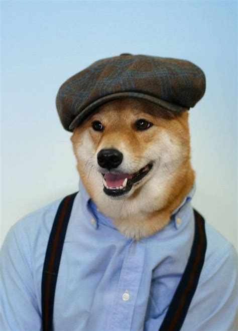 bodhi  menswear dog models real mens clothes  major