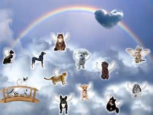 dogs and cat at rainbow bridge pictures photos and images for and