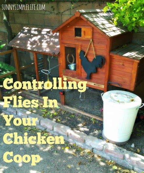 Backyard Fly by Flies In The Chicken Coop And How To Them