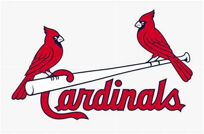 Cardinals Svg Louis Cardinal Transparent Clipart Clipartkey