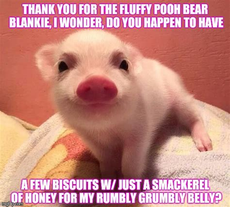 Thanks Baby Meme - piglet sans pooh thank you for the fluffy pooh bear blankie i wonder do you happen to have a