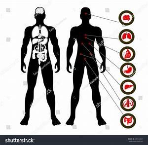 Vector Illustration Diagram Human Anatomy Stock Vector