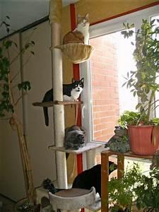 Arbre A Chat Solide : arbre a chat etroit ~ Mglfilm.com Idées de Décoration