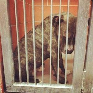 URGENT - Heartbroken and defeated, shelter dog's sad face ...
