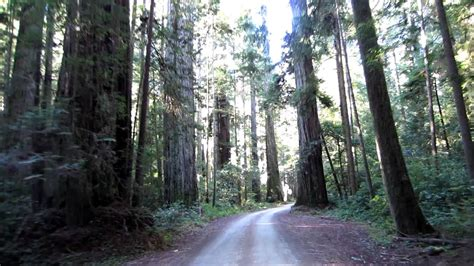 Driving Through Jedediah Smith Redwoods State Park Youtube