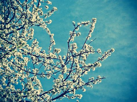 Pavasara attēli fonam - Spoki
