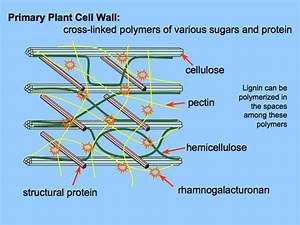 Basic Plant Cytology 1