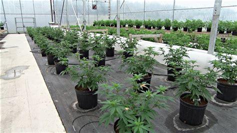 la marihuana 224 usage m 233 dical peut 234 tre une d 233 pense remboursable