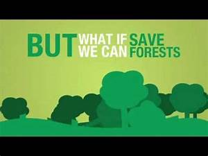How to Save Trees and Forests? - YouTube