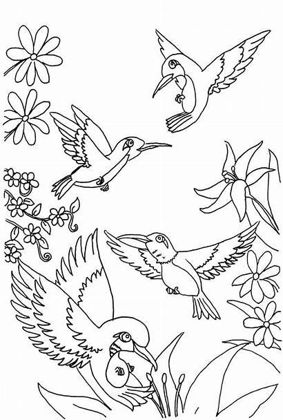 Coloring Hummingbird Pages Printable