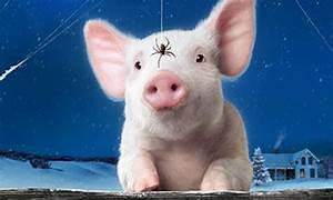 Some Pig    Process