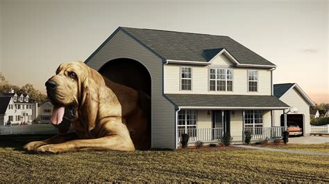 house dogs 15 amazing houses that every owner needs to see