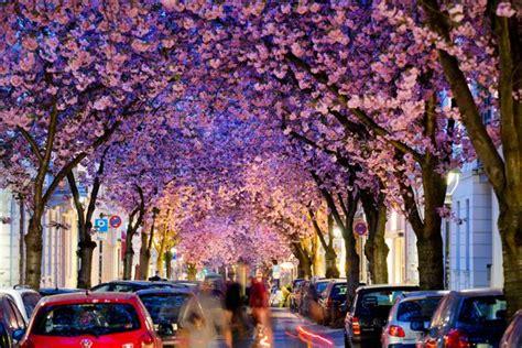 les  beaux arbres au monde travelercar