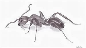 Ameisen Mit Flügel In Der Wohnung : ameisennest im haus was tun ameisen bek mpfen tipps gegen ameisen im haus garten ameisen bek ~ Orissabook.com Haus und Dekorationen
