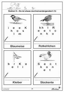 Vögel Im Winter Kindergarten : arbeitsblatt vorschule arbeitsbl tter v gel kostenlose druckbare arbeitsbl tter f r ~ Whattoseeinmadrid.com Haus und Dekorationen