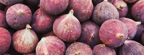 types of figs types of fresh and dried figs berkeley wellness