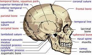Pin By Bernadette On Skulls And Skeletons