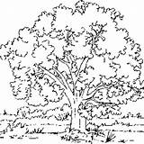 Tree Coloring Elm Printable Designlooter Pages sketch template