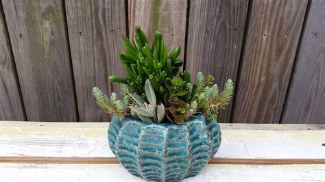 how often do you water succulents how often should you water succulents paperwingrvice web fc2 com