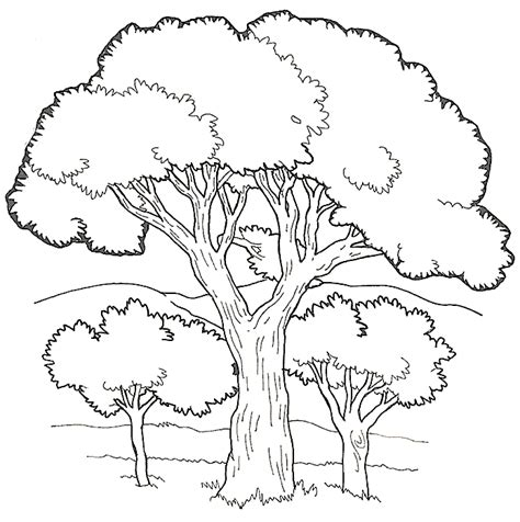 tree coloring book coloring home