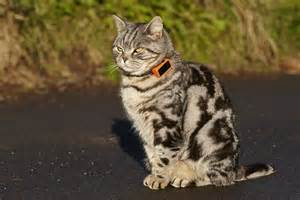 gps for cats discover the secret of your cat