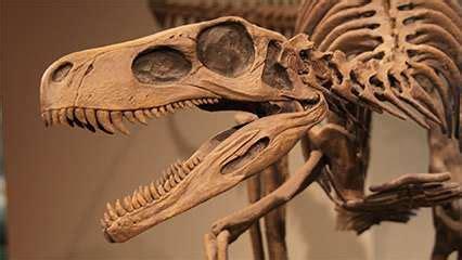 Fossil | paleontology | Britannica.com