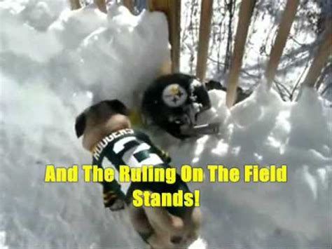 green bay packer pug mikey pees  steelers super bowl