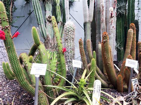 Botanischer Garten Leipzig Kakteen by Botanischer Garten Schmetterlingshaus Leipzig
