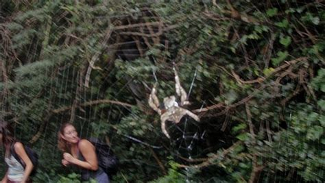 scary spiders  port st johns photo