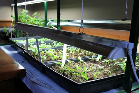 starting seeds lights how to start seeds using grow lights one hundred dollars a month