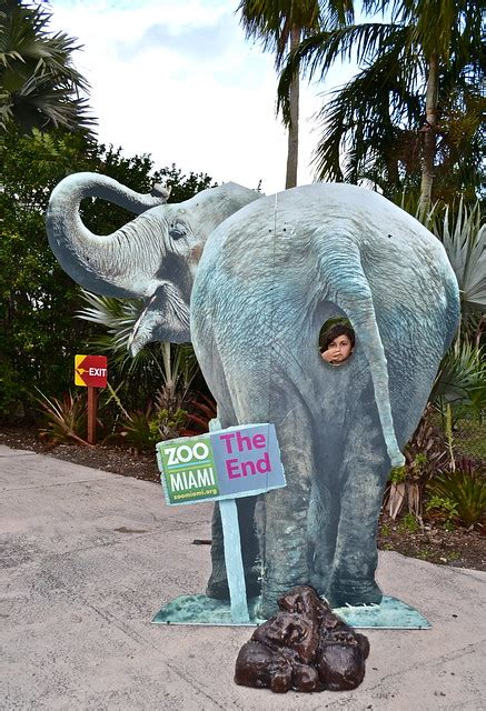 miami zoo metro animals cage less zoos relaxed surroundings wonderful really them