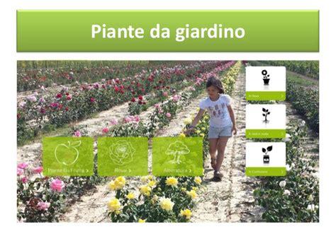 piante ricanti da giardino piante da giardino