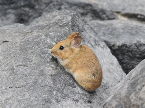 China Faces Criticism From Conservation Scientists For