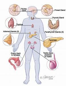 Living With Pancreatitis  Pancreatitis  U0026 Popcorn