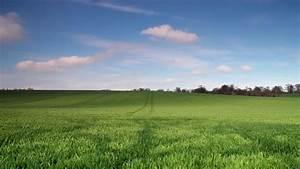 Field Background wallpaper | 1920x1080 | #83708