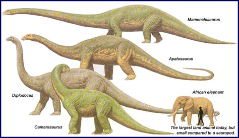 Amazing Cultures 2 Dinosaurs Of The Jurassic Period