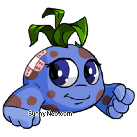 Glass Bottom Boat Tours Neopets by How To Get A Kiko On Neopets Better