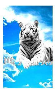 Weißer Tiger Full HD Wallpaper and Hintergrund | 1920x1080 ...