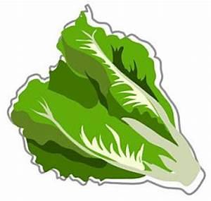 Free Lettuce Clipart Pictures - Clipartix